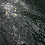 Svømming i Hardangerfjorden