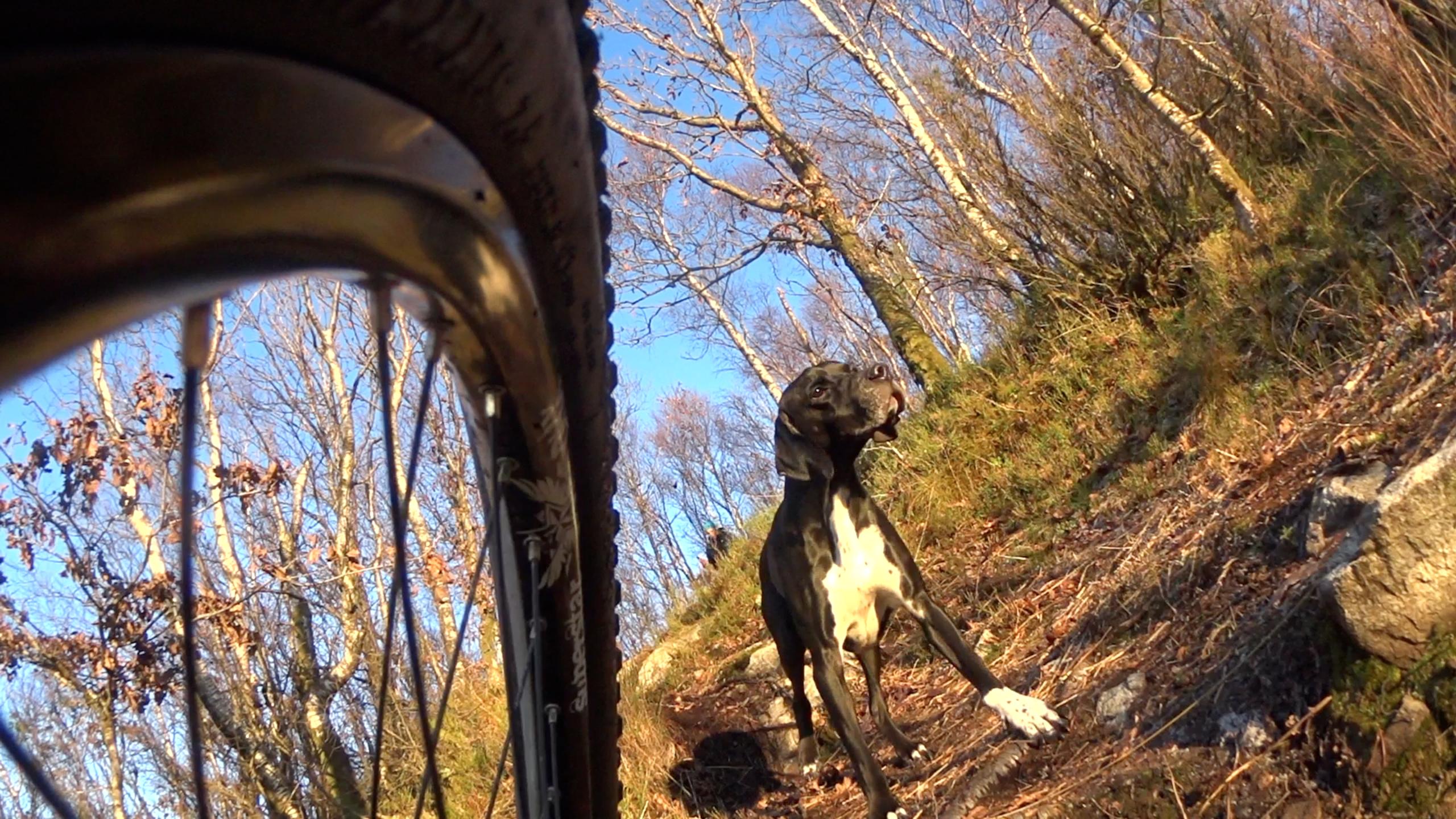 Hund bak et sykkelhjul